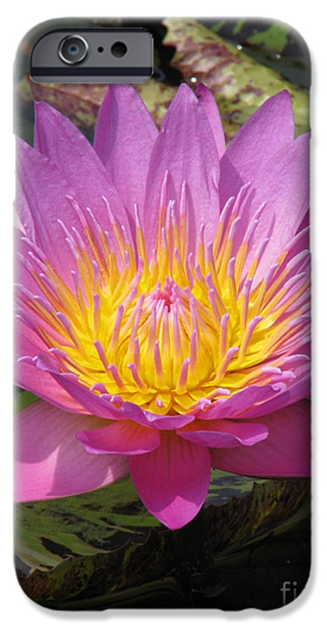 Lotus IPhone 6 Case featuring the photograph In Position by Amanda Barcon