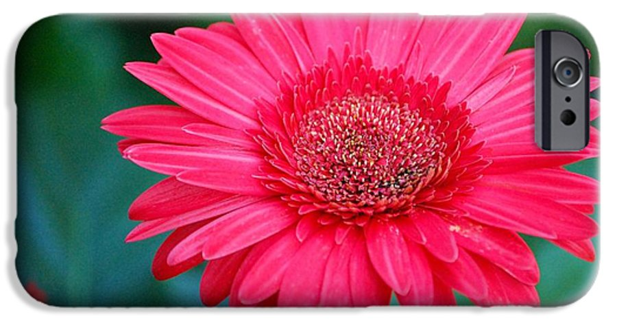 Gerber Daisy IPhone 6 Case featuring the photograph In The Pink by Debbi Granruth