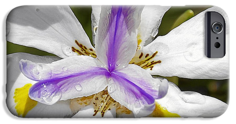 Flower IPhone 6 Case featuring the photograph Iris An Explosion Of Friendly Colors by Christine Till