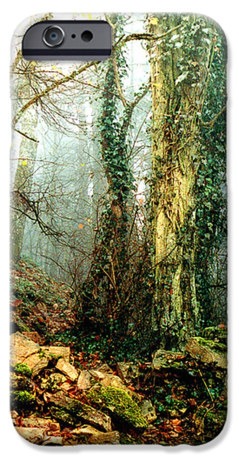 Ivy IPhone 6 Case featuring the photograph Ivy In The Woods by Nancy Mueller