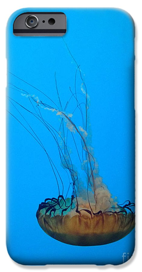 Jellyfish IPhone 6 Case featuring the photograph Jellyfish Art by Michael Mooney