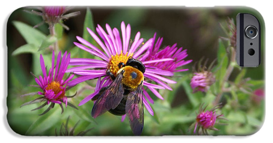 Bumble Bee IPhone 6 Case featuring the photograph Just Beeing Debbie-may by Debbie May