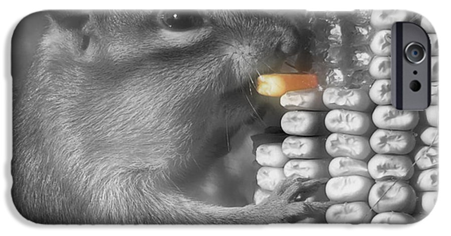 Chipmunk IPhone 6 Case featuring the photograph Just One More Bite by Kenneth Krolikowski