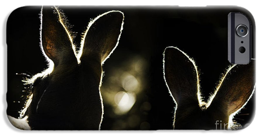 Kangaroo IPhone 6 Case featuring the photograph Kangaroos Backlit by Avalon Fine Art Photography