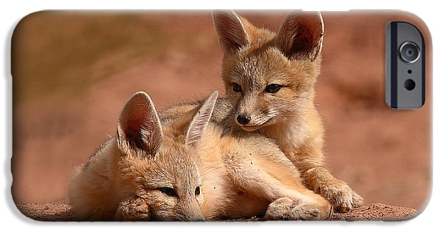 Fox IPhone 6 Case featuring the photograph Kit Fox Pups On A Lazy Day by Max Allen
