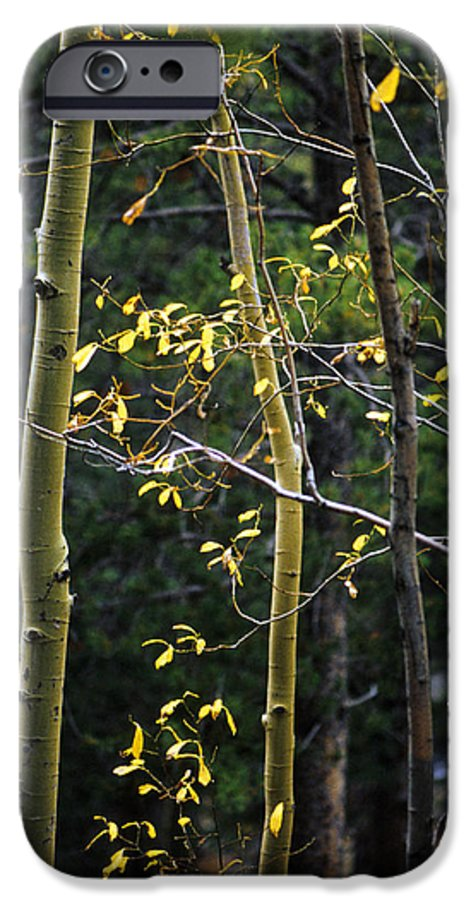 Aspen IPhone 6 Case featuring the photograph Late Aspen by Jerry McElroy