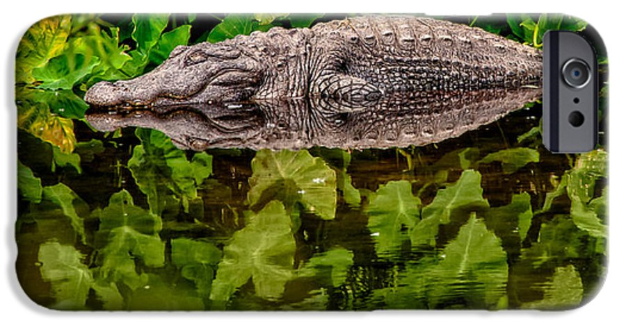 Alligator IPhone 6 Case featuring the photograph Let Sleeping Gators Lie by Christopher Holmes