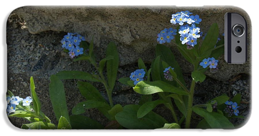 Forget-me-nots IPhone 6 Case featuring the photograph Life Will Prevail by Anna Lisa Yoder