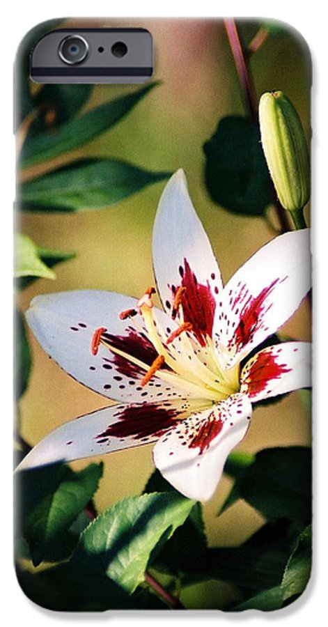 Flower IPhone 6 Case featuring the photograph Lily by Steve Karol