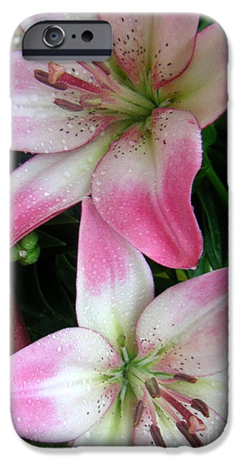 Nature IPhone 6 Case featuring the photograph Lily Times Two by Lucyna A M Green