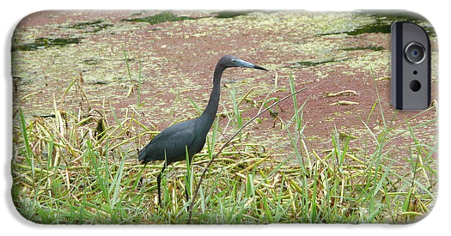 Nature IPhone 6 Case featuring the photograph Little Blue Heron by Kathy Schumann