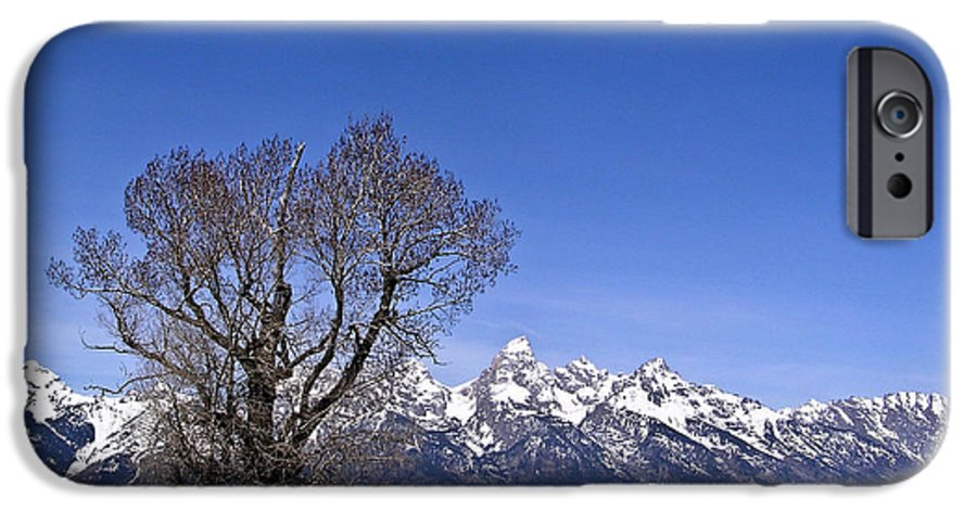 Tree IPhone 6 Case featuring the photograph Lone Tree At Tetons by Douglas Barnett