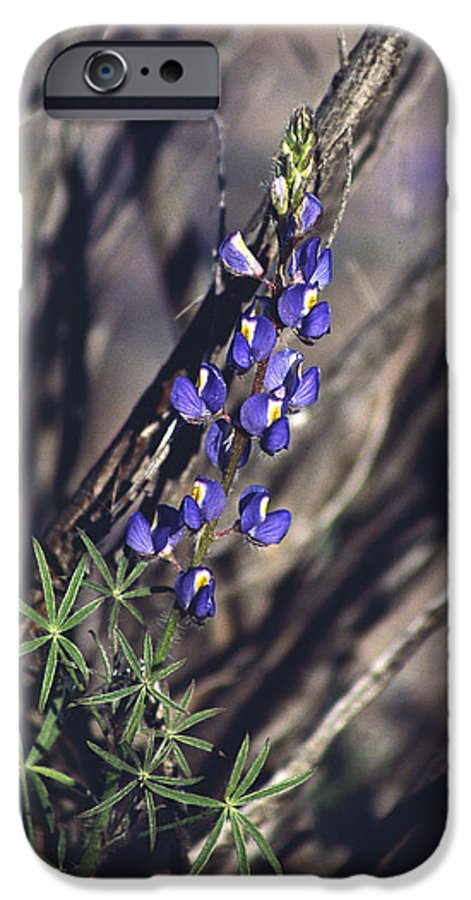 Flower IPhone 6 Case featuring the photograph Lonely Lupine by Randy Oberg