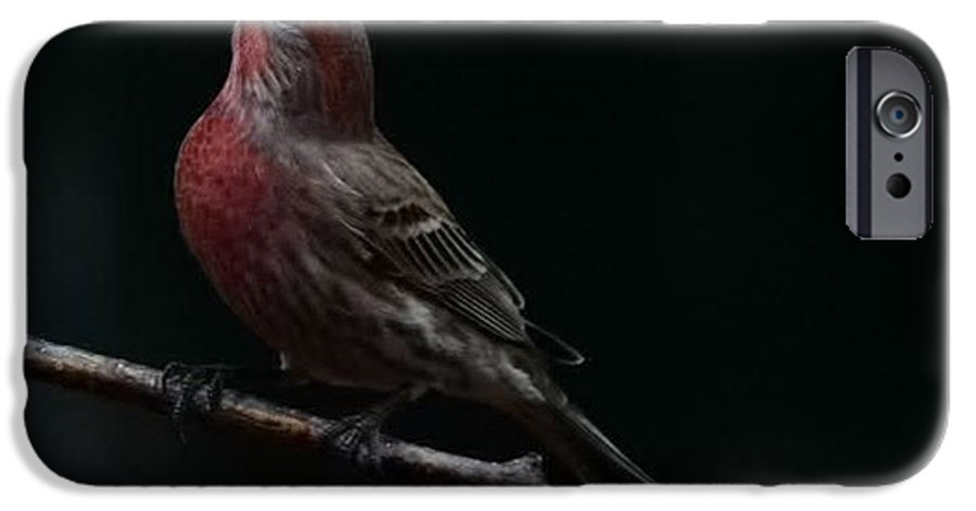 Finch IPhone 6 Case featuring the photograph Looking Towards Heaven by Gaby Swanson