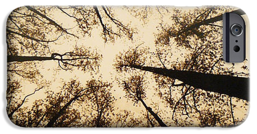 Trees IPhone 6 Case featuring the photograph Looking Up by Jack Paolini