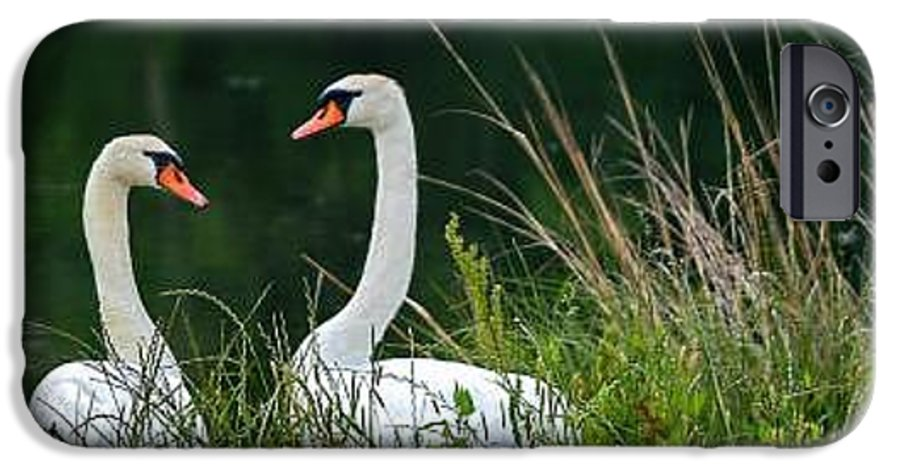 Clay IPhone 6 Case featuring the photograph Loving Swans by Clayton Bruster