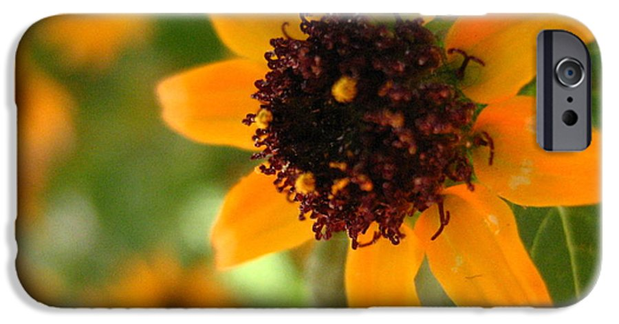 Flower IPhone 6 Case featuring the photograph Mini Sunflower by Melissa Parks