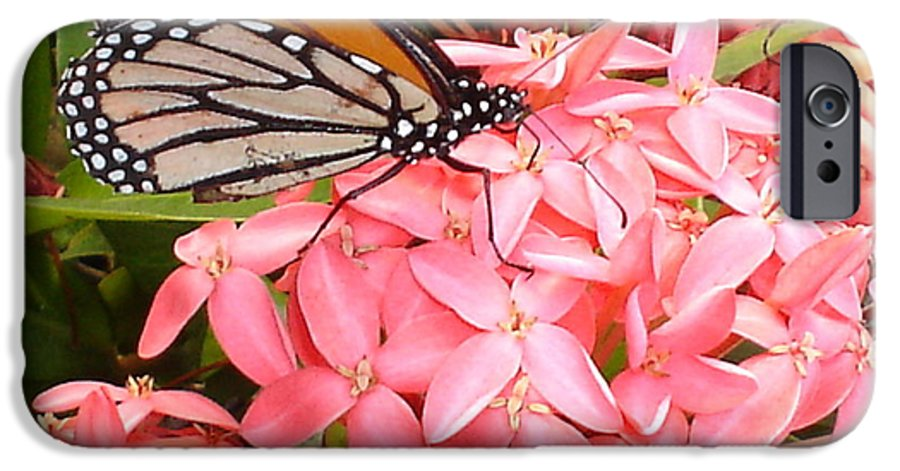Butterfly IPhone 6 Case featuring the photograph Monarch On Huneysuckle by Chandelle Hazen