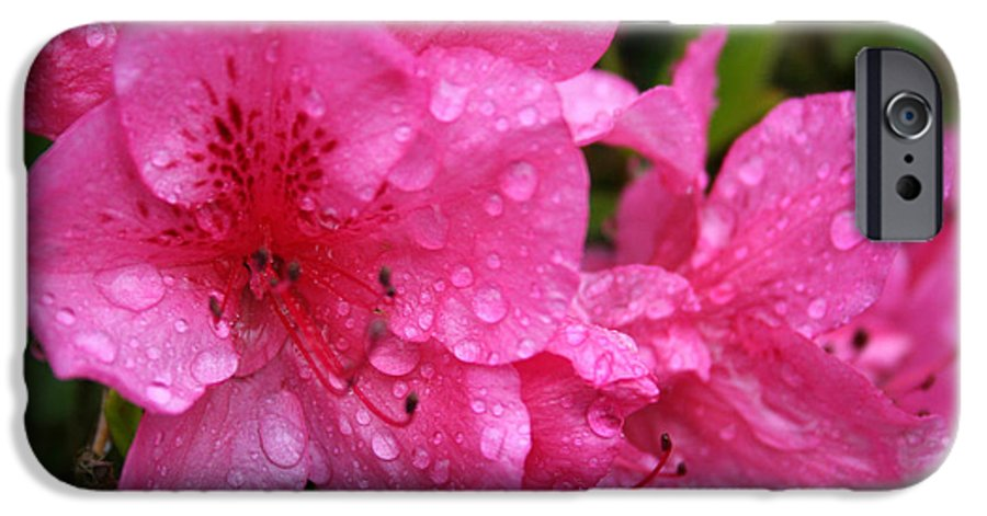 Azaleas IPhone 6 Case featuring the photograph Morning Dew by Mary Gaines