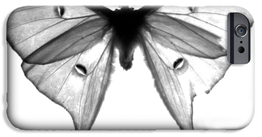 Moth IPhone 6 Case featuring the photograph Moth by Amanda Barcon