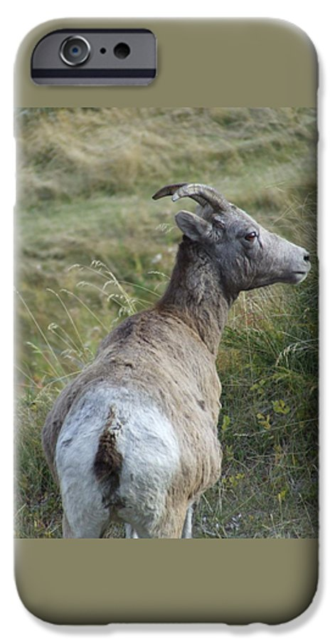 Bighorn Sheep IPhone 6 Case featuring the photograph Mother Bighorn by Tiffany Vest
