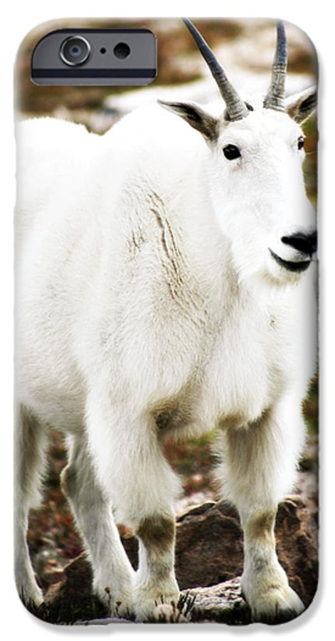 Animal IPhone 6 Case featuring the photograph Mountain Goat by Marilyn Hunt