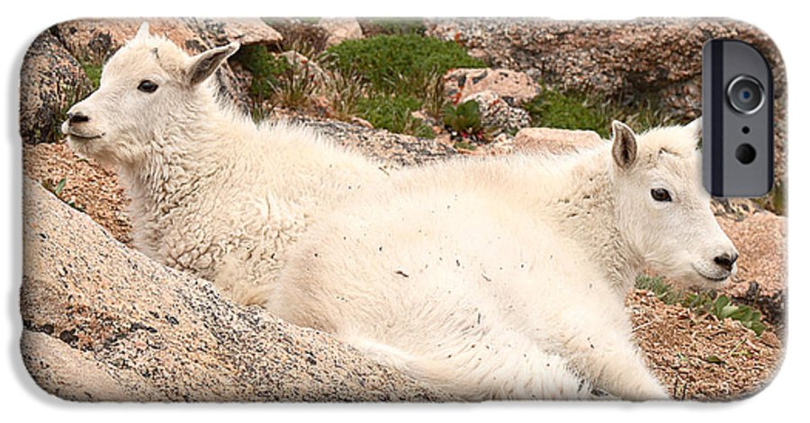 Mountain Goat IPhone 6 Case featuring the photograph Mountain Goat Twins by Max Allen