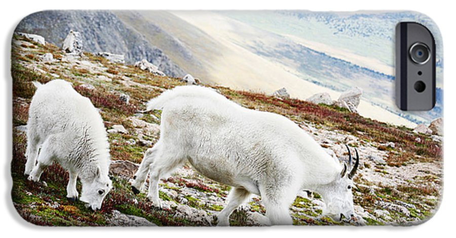 Mountain IPhone 6 Case featuring the photograph Mountain Goats 1 by Marilyn Hunt