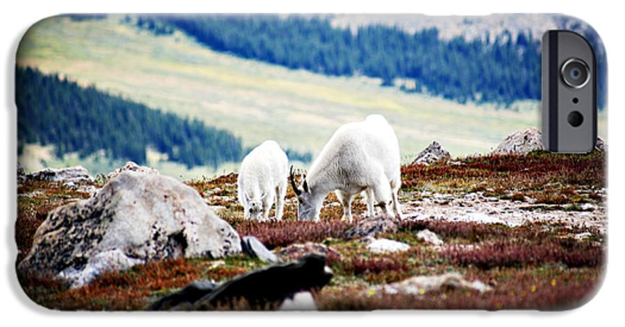Animal IPhone 6 Case featuring the photograph Mountain Goats 2 by Marilyn Hunt