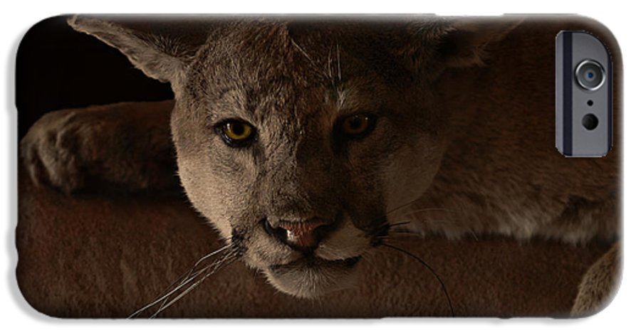 Cougar IPhone 6 Case featuring the photograph Mountain Lion A Large Graceful Cat by Christine Till