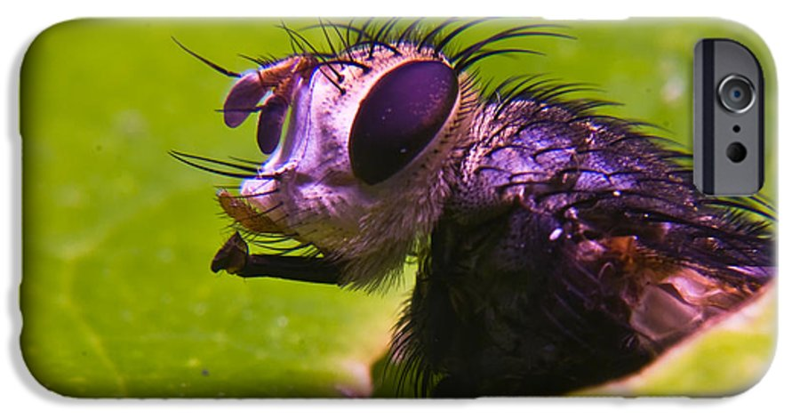 Fly IPhone 6 Case featuring the photograph Mr. Fly by Douglas Barnett