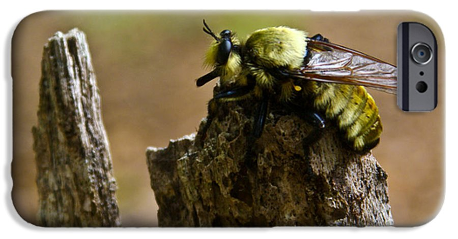 Fly IPhone 6 Case featuring the photograph Mrs. Fly by Douglas Barnett