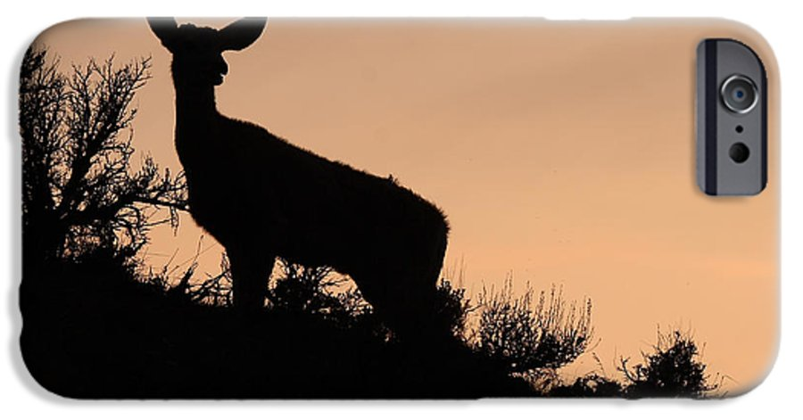 Deer IPhone 6 Case featuring the photograph Mule Deer Silhouetted Against Sunset Ridge by Max Allen