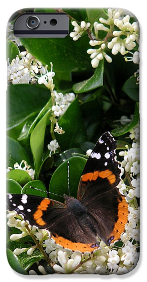 Nature IPhone 6 Case featuring the photograph Nature In The Wild - A Sweet Stop by Lucyna A M Green