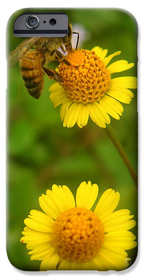 Nature IPhone 6 Case featuring the photograph Nature In The Wild - Hanging In There by Lucyna A M Green