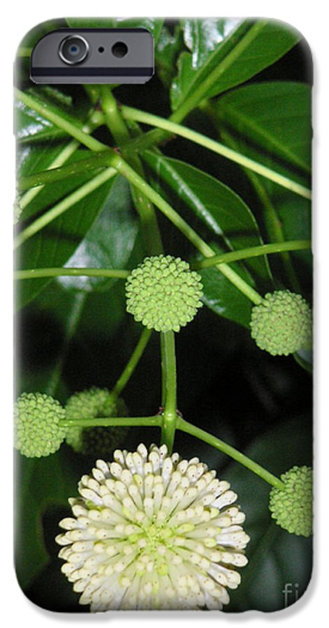 Nature IPhone 6 Case featuring the photograph Nature In The Wild - Natural Pom Poms by Lucyna A M Green