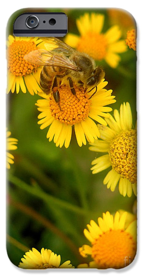Nature IPhone 6 Case featuring the photograph Nature In The Wild - The Nectar Company by Lucyna A M Green