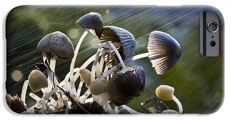 Mushrooms Rain Showers Umbrellas Nature Fungi IPhone 6 Case featuring the photograph Nature by Sheila Smart Fine Art Photography