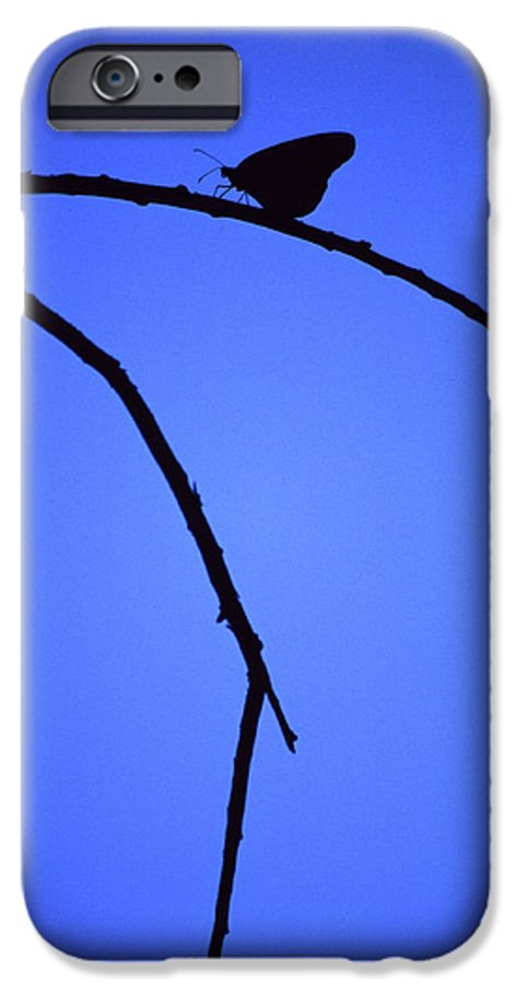 Nature IPhone 6 Case featuring the photograph Natures Elegance by Randy Oberg