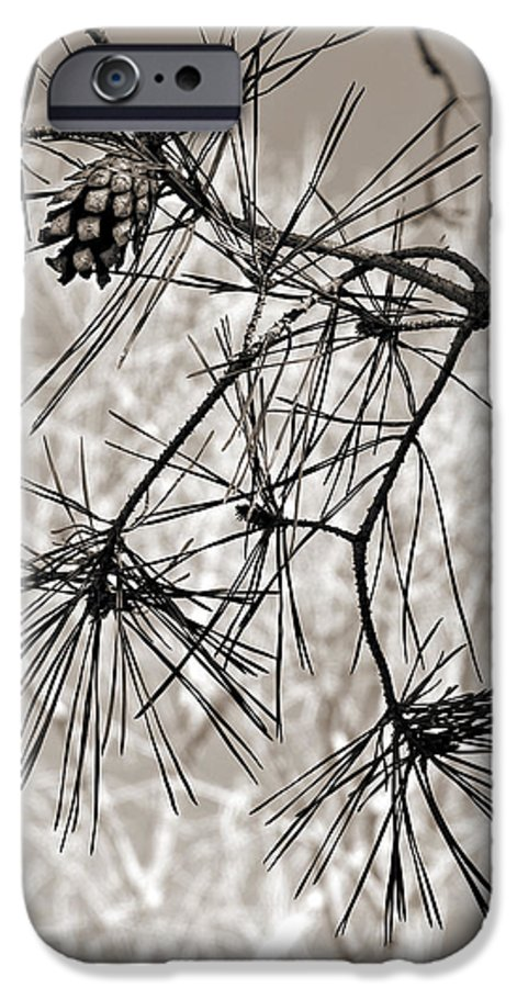 Tree IPhone 6 Case featuring the photograph Needles Everywhere by Marilyn Hunt