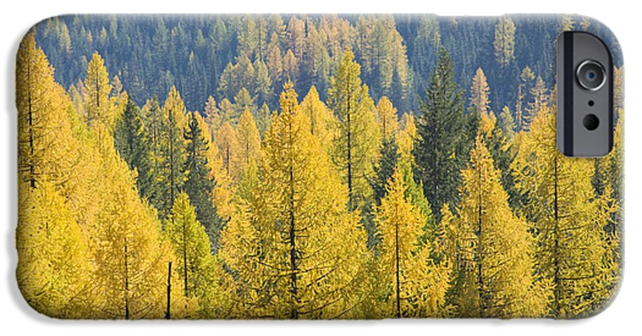 Trees IPhone 6 Case featuring the photograph North Idaho Gold by Idaho Scenic Images Linda Lantzy