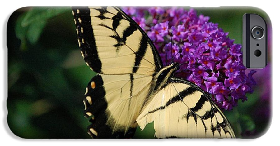 Butterfly IPhone 6 Case featuring the photograph Nothing Is Perfect by Debbi Granruth