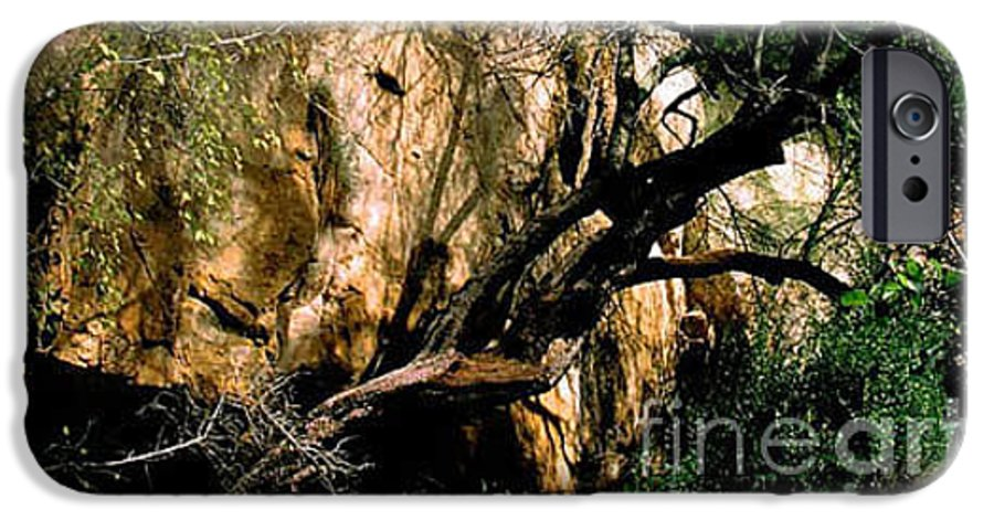 Trees IPhone 6 Case featuring the photograph Old Tree by Kathy McClure