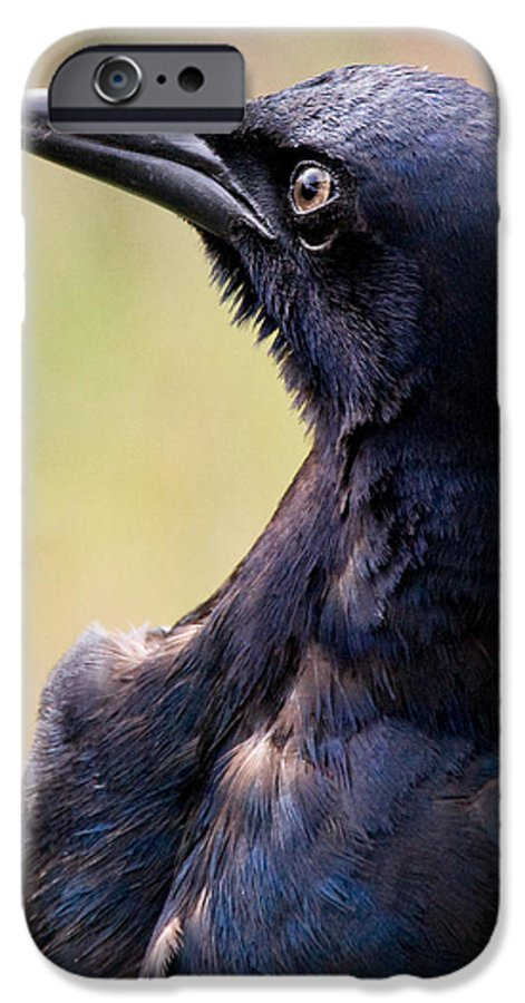 Bird IPhone 6 Case featuring the photograph On Alert by Christopher Holmes