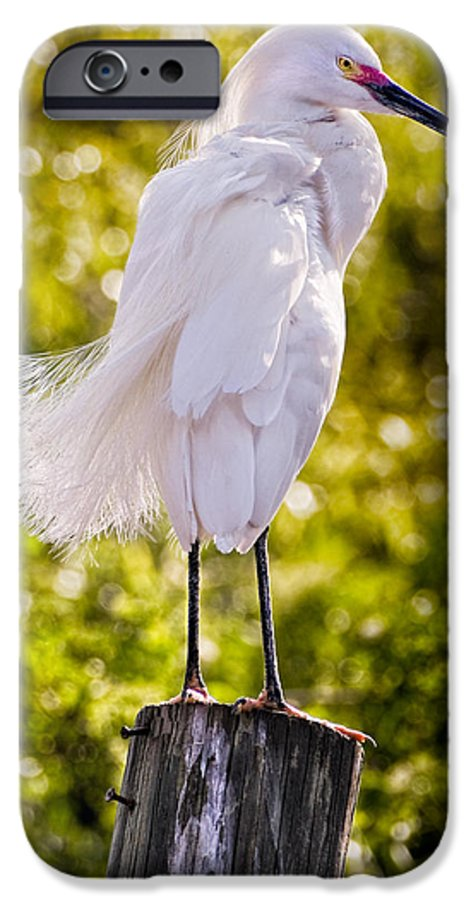 snowy Egret IPhone 6 Case featuring the photograph On Watch by Christopher Holmes