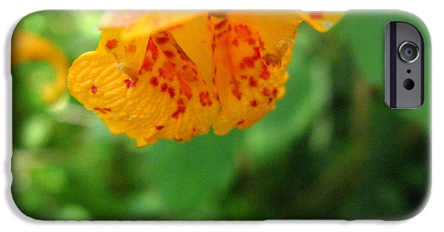 Flower IPhone 6 Case featuring the photograph Orange Flower by Melissa Parks