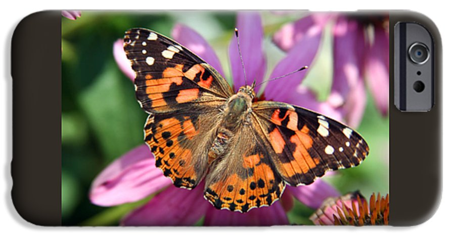 Painted Lady IPhone 6 Case featuring the photograph Painted Lady Butterfly by Margie Wildblood
