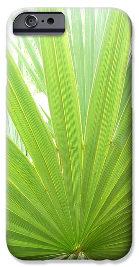 Green IPhone 6 Case featuring the photograph Palmetto by Kathy Schumann