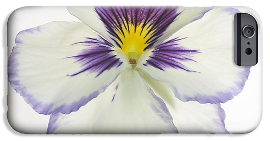 Pansy Genus Viola IPhone 6 Case featuring the photograph Pansy 2 by Tony Cordoza