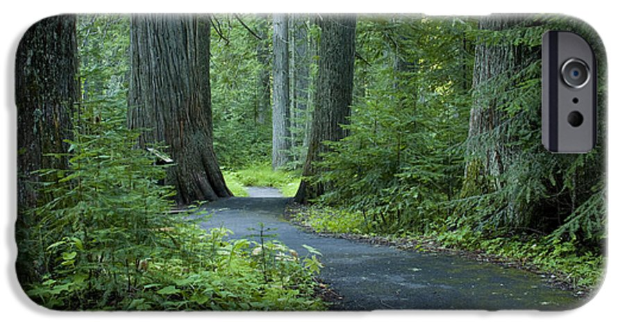 Grove IPhone 6 Case featuring the photograph Path Through The Cedars by Idaho Scenic Images Linda Lantzy